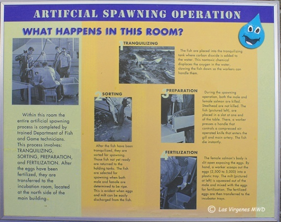 This poster tells you lots about the spawning process.
